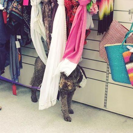 Zoe ALWAYS does this when we are shopping! Little stinker!