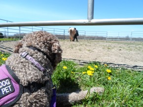 Our friend took us to see her horse! This is Zoe learning that big animals, like horses, are ok.